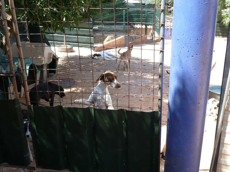 Fencing at Goldra(2)
